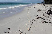 private hotel beach cat island bahamas