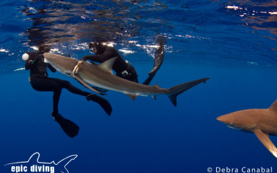 dusky shark rescue atlas