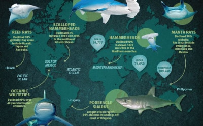 Humane Society for protecting sharks and rays
