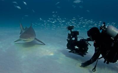 howard hall filming a bull shark
