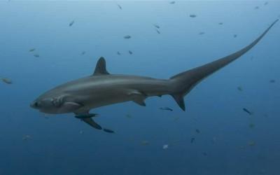 shark conservation wins