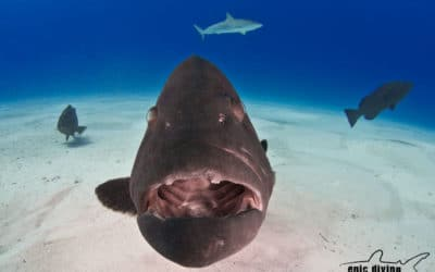 save the grouper
