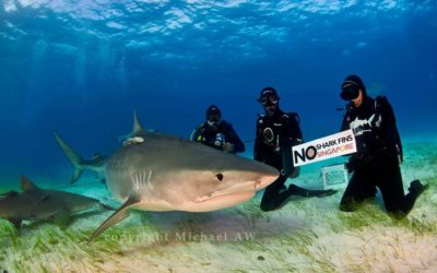 no shark fin soup tiger beach