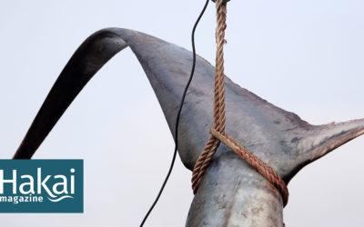 shark fin ban thresher