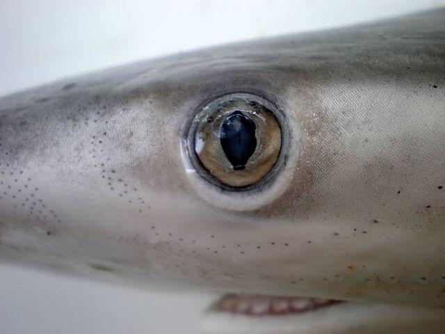 shark vision