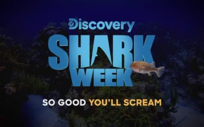 shark week 2019 discovery channel
